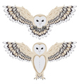 Cartoon Barn Owl2 vector image vector image