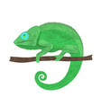 chameleon icon cartoon of walking vector image vector image
