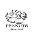 hand drawn peanuts vector image