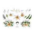 romantic postcard elements set of lily flowers vector image