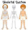 Skeletal system in human boy vector image vector image