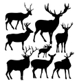 deer silhouettes vector image