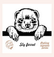 peeking sly ferret - funny ferret out vector image vector image