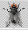 realistic insect fly in vector image vector image