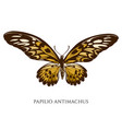 set hand drawn colored papilio vector image