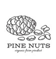 hand drawn pine nuts vector image vector image