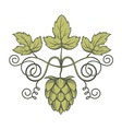 image of hops vector image vector image
