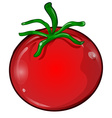 tomato cartoon isolated vector image