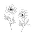 hand drawn peony floral vector image vector image