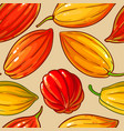 cocoa seeds pattern on color background vector image