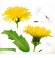dandelion 3d icon set vector image