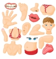 Human body parts icons set vector image