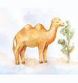 little camel eating little bush in desert vector image vector image