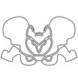 pelvis skeleton black color path icon vector image vector image