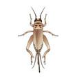 cricket grig gryllus campestris sketch of vector image