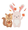 cute rabbit and squirel with acorn leaves hello vector image