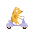 Dog Riding A Scooter vector image vector image