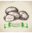 Hand drawn sketch potato vegetable Eco food vector image vector image