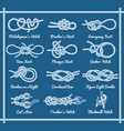 set of rope knots hitches bows bends vector image