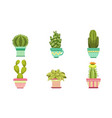 cactus and succulents plants in flower pots set vector image vector image