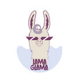 funny lama in sunglasses with curly hair vector image