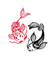 two japanese carp koi fishes isolated on white vector image vector image
