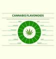 cannabis flavonoids horizontal infographic vector image vector image
