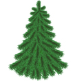 Fir tree without Christmas decorations vector image vector image