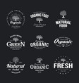 olive tree vintage old logo badge isolated on dark vector image vector image