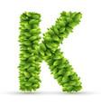 letter k alphabet green leaves vector image vector image