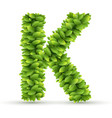Letter K alphabet of green leaves vector image