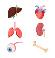 medical human organs realistic heart two lungs vector image