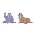 set walruses vector image