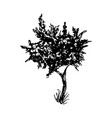 tree black ink silhouette vector image