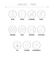 collection of the fruits vector image vector image
