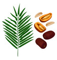 delicious ripe dates fruits and green palm branch vector image
