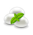 Mozzarella cheese isolated on white vector image vector image