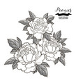 peony flowers composition in japanese tattoo vector image vector image