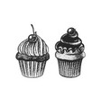 chocolate cupcake with cherries hand drawn bakery vector image vector image