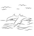 dolphins drawn contour black coloring vector image