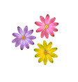 three flowers of different colors flowers vector image
