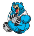 bear strong dumbbell gym vector image vector image