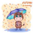 cute cartoon bull with umbrella among autumn vector image vector image
