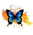 decorative watercolor grunge butterfly for your vector image vector image