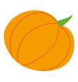 harvest festival pumpkin food vegetable vector image