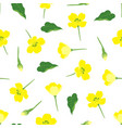 pattern with flowers rape vector image