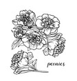 peonies heads hand drawn sketch vector image