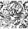 seamless pattern with black and white papilio vector image vector image