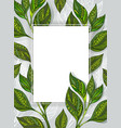 Banner with Tea Leaves vector image