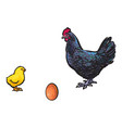 brown egg chick and rooster sketch set vector image vector image